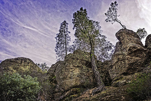 Pinnacles and Trees by Bill Boehm