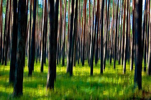 Piska Forest by Tomasz Dziubinski