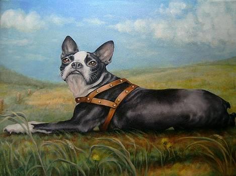 Pixie on the Prairie by Pamela Humbargar