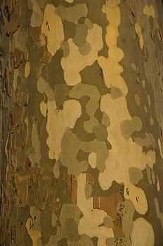 Plane Tree Bark by Austin Brown