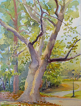 Plane Tree in September by Pat Percy