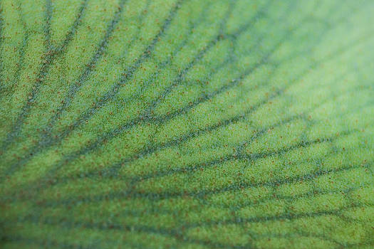 Plant Abstract 3 by Jose Mena