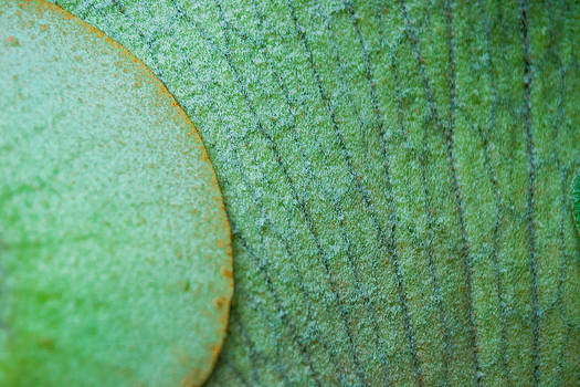 Plant Abstract by Jose Mena