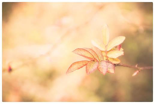 Lenny Carter - Plant frills 2