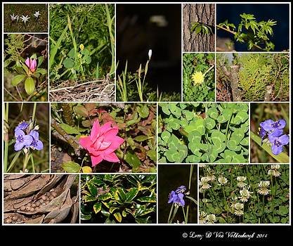 Plant Life Collage From Starke Florida by Larry Van Valkenburgh