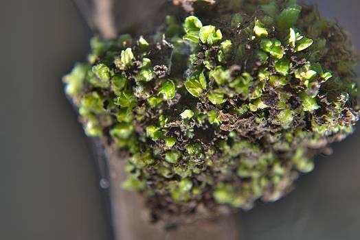 Plant Mutation by Salman Ravish
