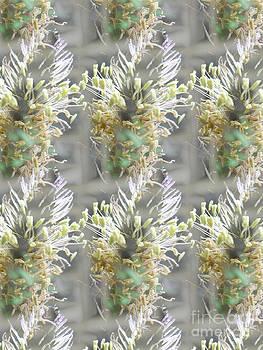 Plantain flower by Dana Hermanova