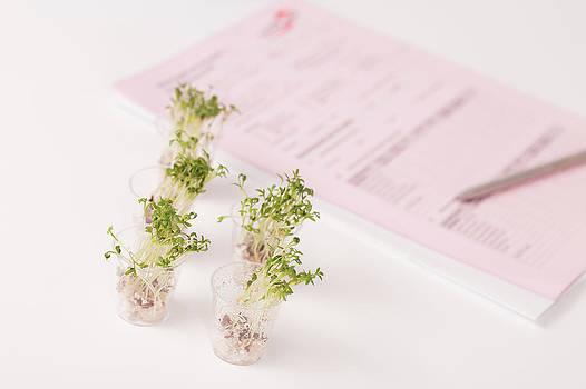 Plants In Lab by Wladimir Bulgar