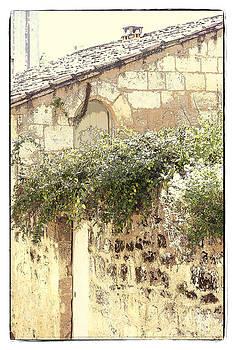 Heiko Koehrer-Wagner - Plants Love Old Stones