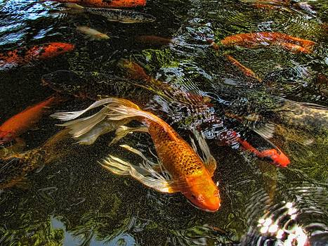 Playing Koi With Me by Shannon Story