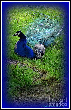 Pleasant Peacock by Deb Badt-Covell