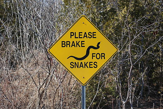 Please Brake For Snakes by Jeffrey Cohen