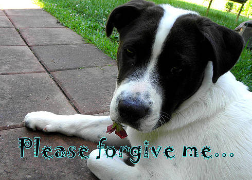 Please Forgive Me  by Kim Galluzzo Wozniak