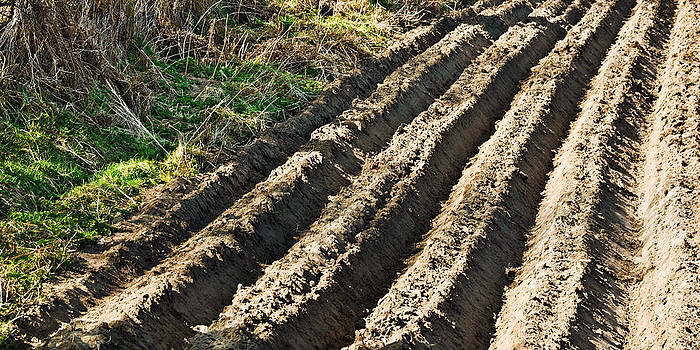 Jane McIlroy - Ploughed Field