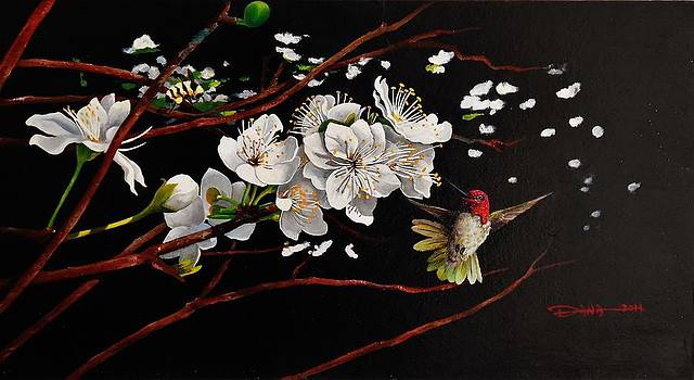 Plum blossoms and Anna's hummingbird by Dana Newman