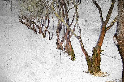 Plum trees by Vladimiras Nikonovas
