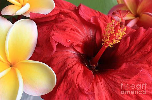 Plumeria and Hibiscus by Kristine Merc