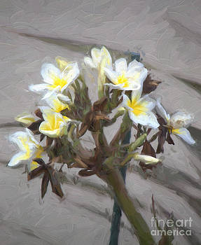 Plumeria and shadow Oil Painting by Heinz G Mielke