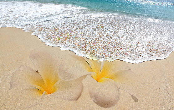 Plumeria Beach by Athena Mckinzie