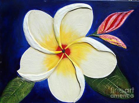 Plumeria by Darlene Green