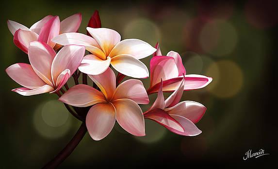 Plumeria by Manavi Thatha