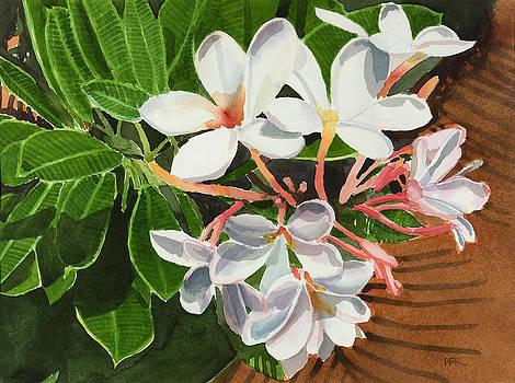Plumeria still life  by Pablo Rivera