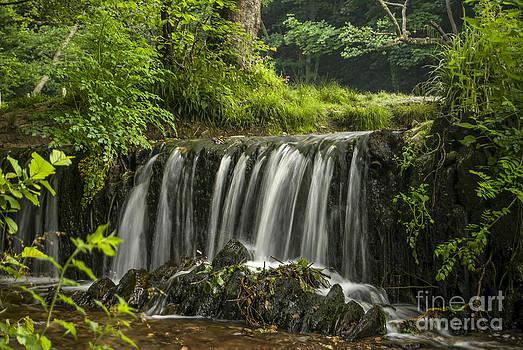 Plymbridge Falls by Donald Davis