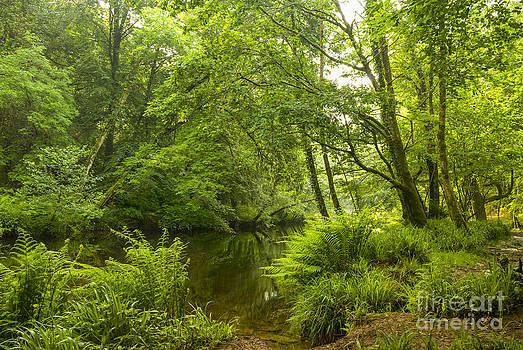 Plymbridge Woods by Donald Davis