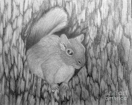 PM 330-63 14x17 Graphite  Grey Squirrel by Peggy Miller