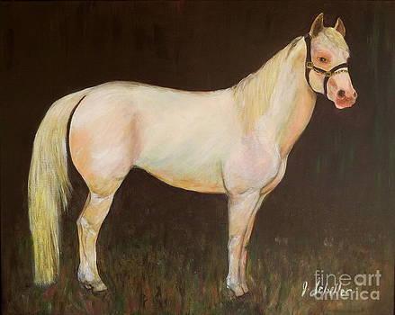 Poco San Badger Stallion by Jodie  Scheller