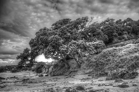 Pohutukawa on the Coast by Dave McGregor
