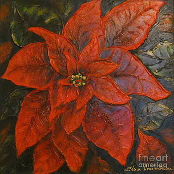 Poinsettia/ Christmass flower by Elena  Constantinescu