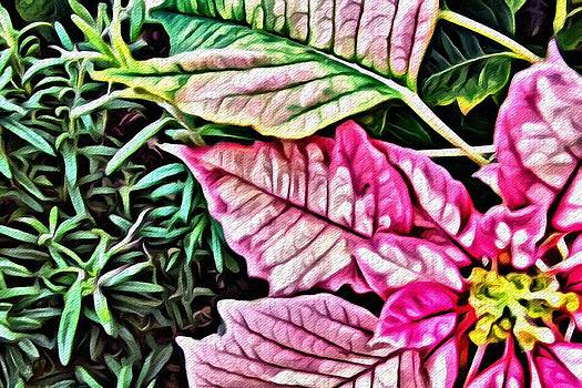 Jared Johnson - Poinsettia in Pink