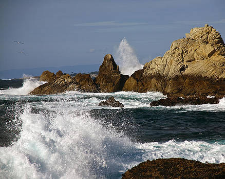 Point Lobos at High Tide by Neal Martin
