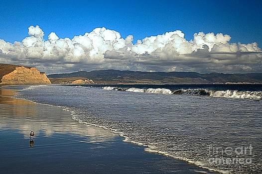 Adam Jewell - Point Reyes Drakes Beach
