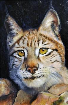 Pointed Advantage - Siberian Lynx by Pamela Bergen