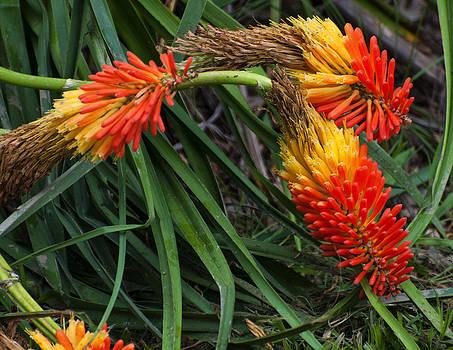 Chris Flees - poker flower