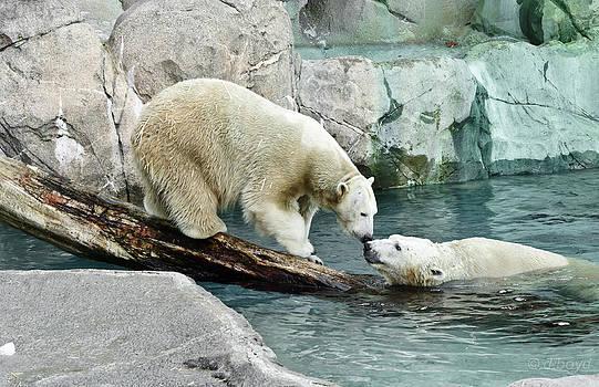 Polar Bear Kiss by Diana Boyd