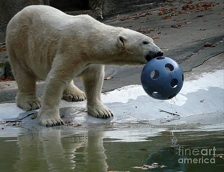 Polar Bear Play by Avis  Noelle