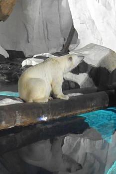 Polar Bear Reflection by Amanda Eberly-Kudamik