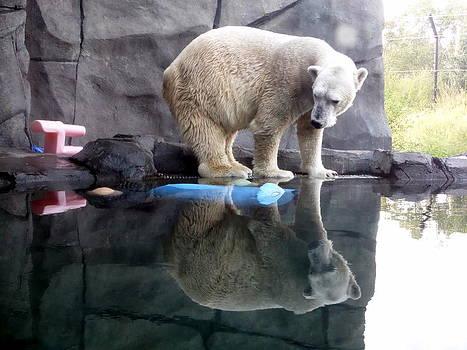 Polar Bear Reflections by Loretta Orr