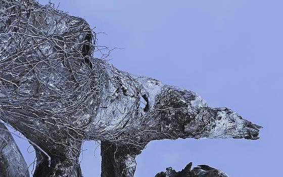 Polar by Jessica Snyder