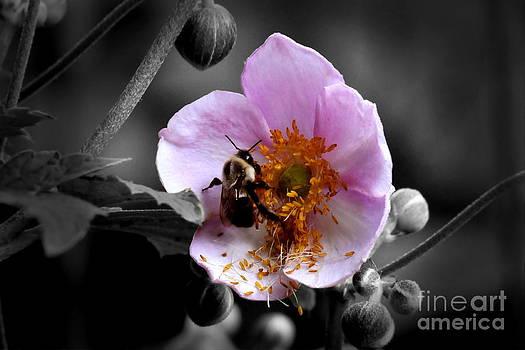 Pollen Bee by Jennifer Englehardt