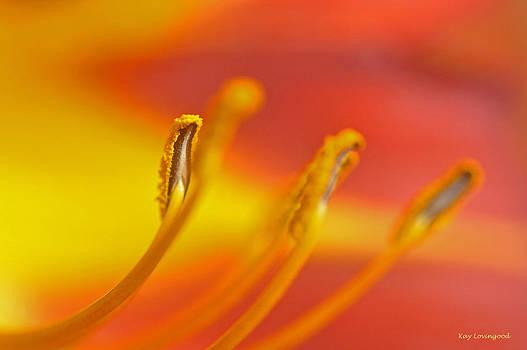 Kay Lovingood - Pollen Pads