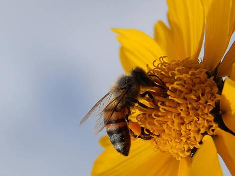 Pollen Seeker by Justyne Moore