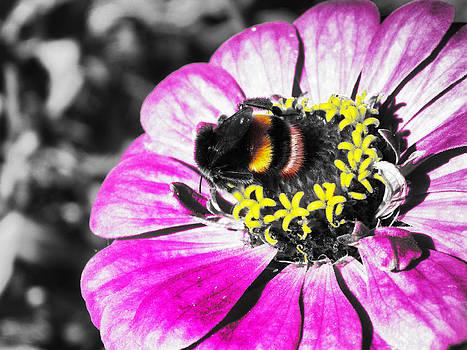 Pollinate by Ivan Gomez