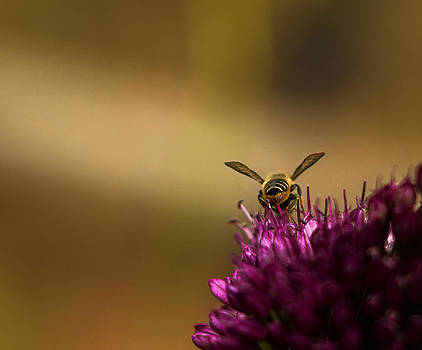 Pollination by Linda Storm