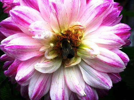 Pollination Nation 5 by Will Boutin Photos