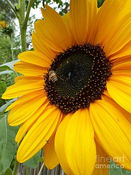 Pollinator - Bee and Sunflower  by Helen  Campbell