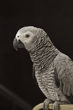 Polly want a cracker by Tal Richter
